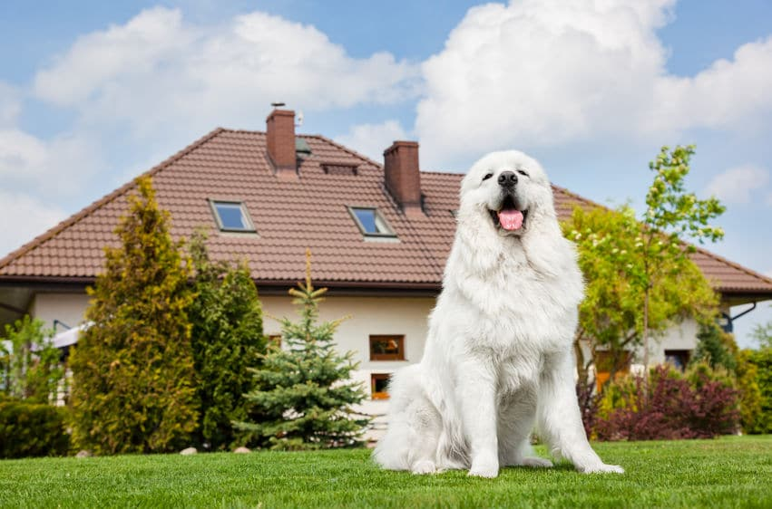 How To Train Your Dog To Guard The House Property Guard