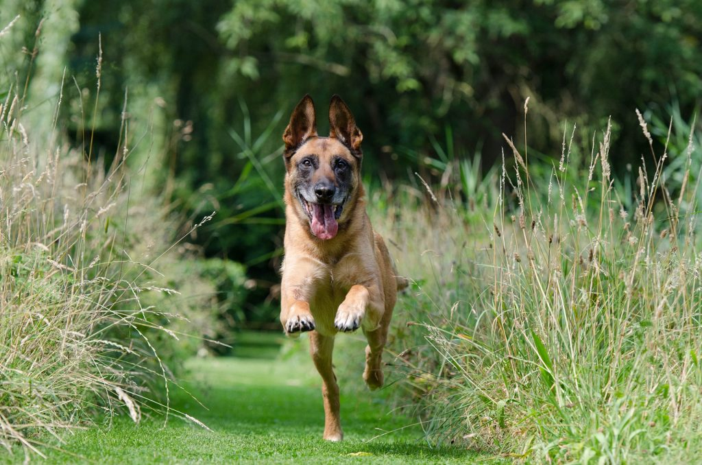 Best Bark Control Devices for Your Dog in 2019