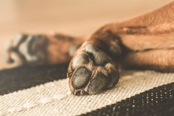 what are the signs of your dog dying